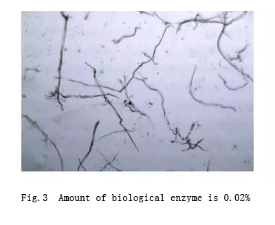 biological enzyme amount is 0.02