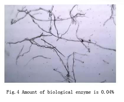 biological enzyme